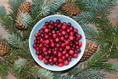 Cranberry on Christmas Stock Image