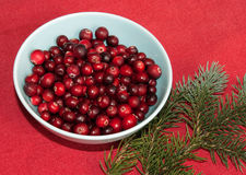Cranberry on Christmas Royalty Free Stock Image