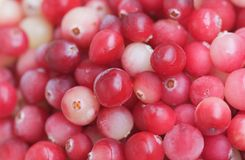 Cranberry close-up Royalty Free Stock Images