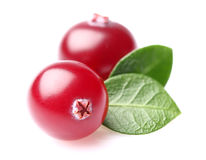 Cranberry in closeup Royalty Free Stock Images
