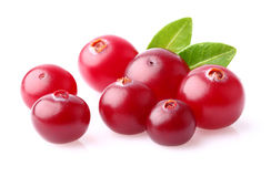 Cranberry in closeup Stock Photo