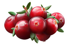 Cranberry composition, clipping paths. Cranberries composition with leaves Vaccinium oxycoccus, clipping paths stock image