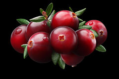 Cranberry composition, clipping paths. Cranberries composition with leaves (Vaccinium oxycoccus), clipping paths Royalty Free Stock Images