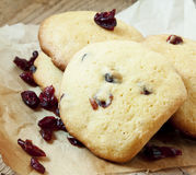 Cranberry Cookies Stock Images