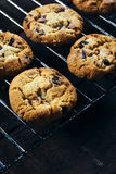 Cranberry cookies Royalty Free Stock Photo