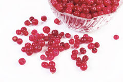 cranberry czerwień Zdjęcie Royalty Free