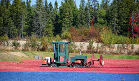 Cranberry farm. Saint-Louis-de-Blandford Quebec Canada 10 06 16: Cranberry farm water management harvesting in Saint-Louis-de-Blandford located on the Becancour Stock Photos