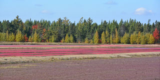 Cranberry farm water management harvesting Stock Images
