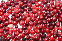 Cranberry fills the whole screen Stock Photography