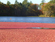 Cranberry Flood Stock Photography