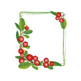 Cranberry frame isolated on white background. Stock Image