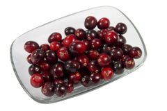 Cranberry Stock Image