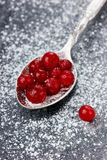 Cranberry frozen with icing sugar in a spoon. On a dark surface Stock Photos