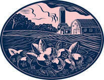 Cranberry Fruit Farm Oval Woodcut Royalty Free Stock Images
