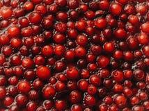 cranberry Fundo do arando Arandos na água Fundo do alimento fotos de stock