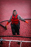 Cranberry Harvesting Stock Images