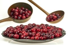 Fresh cranberry on an old metal plate, on white background. Cranberry, a healthy fruit with healing properties. A metal plate with cranberries in a big close-up royalty free stock images