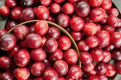 Fresh cranberry, fruit in a big closeup. Cranberry - a healthy, red fruit with healing properties. A metal plate with cranberries in a large close-up stock photo