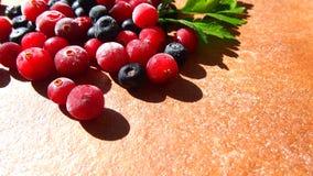 Cranberry i czarna jagoda Zdjęcie Stock