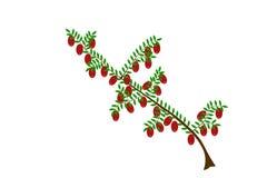 Cranberry ilustracja Fotografia Royalty Free
