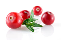 Cranberry isolated Stock Image