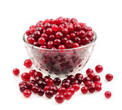 Cranberry isolated Royalty Free Stock Photos