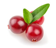 Cranberry isolated Royalty Free Stock Images