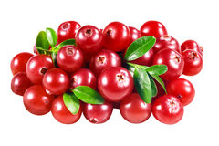 Cranberry isolated on white. With clipping path Royalty Free Stock Image