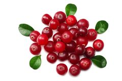 Cranberry isolated on white. With clipping path. Full depth of field. top view royalty free stock photo