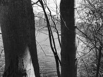 Cranberry jeziora prezerwy obrazy royalty free