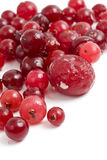 Cranberry.jpg Royalty Free Stock Photos