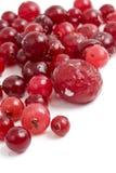Сranberries closeup Royalty Free Stock Photos