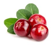 Cranberry with leaf isolated on white background closeup macro.  Royalty Free Stock Image
