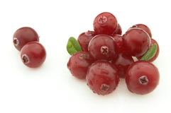 Cranberry with leaves Stock Photography
