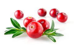 Cranberry with leaves in closeup Royalty Free Stock Photography