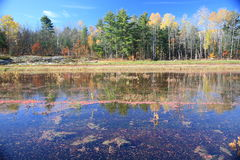 Cranberry Marsh Royalty Free Stock Images