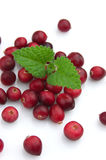 Cranberry with a mint Royalty Free Stock Images