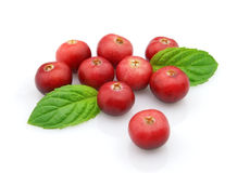 Cranberry with mint Royalty Free Stock Photo