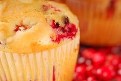 Cranberry muffin Stock Photos