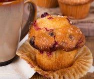Cranberry Muffin Closeup Stock Images