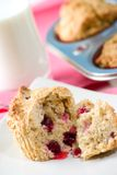 Cranberry muffins Stock Photography