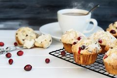 Cranberry Muffins with Fresh Berries. Cranberry Muffins cooling on a bakers rack with extreme shallow depth of field and open muffin with butter and a steaming stock image