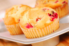 Cranberry muffins in muffin pan Royalty Free Stock Images