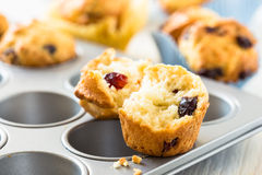 Cranberry muffins in a muffin tin. Freshly baked cranberry muffins in a muffin tin royalty free stock image