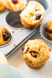 Cranberry muffins in a muffin tin Stock Photography