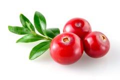 Cranberry na bielu zdjęcia royalty free