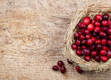 Cranberry nest Stock Image