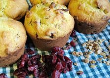 Cranberry Oatmeal Breakfast Muffins on Background of Blue-green Gingham. Freshly baked cranberry oatmeal muffins closeup with loosely scattered oats and dried Royalty Free Stock Images
