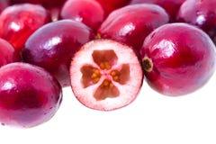 cranberry odizolowywający Fotografia Royalty Free
