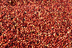 Cranberry pattern Royalty Free Stock Images